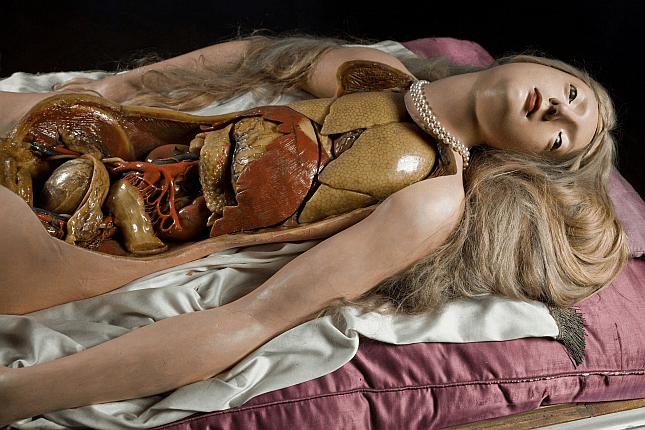 Late-18th century Anatomical Venus (Josephinum Museum of the Medical University of Vienna)