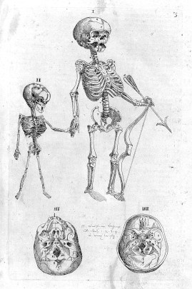 Black and white engraving showing two standing fetal skeletons, holding hands, the larger one holding a bow and arrow.