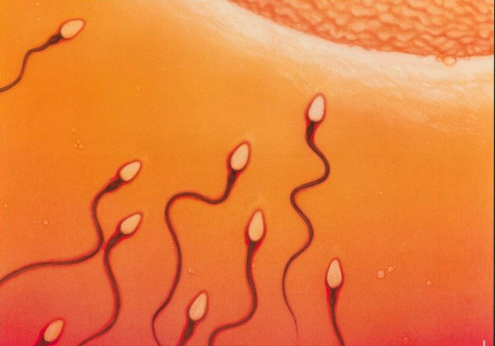 Orange background, a half dozen sperm with wiggly tails swim toward a egg cell in the upper lefthand corner of the image.
