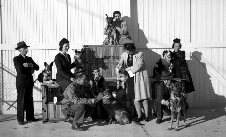 A group of men and women pet several dogs next to a crate reading U.S. Army Dog.