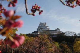 tokyo himeji move Himeji castle in Spring