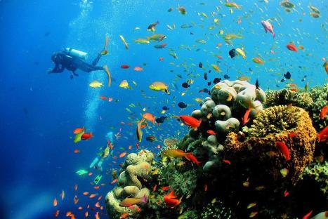 Nemo, Nemo where are you?