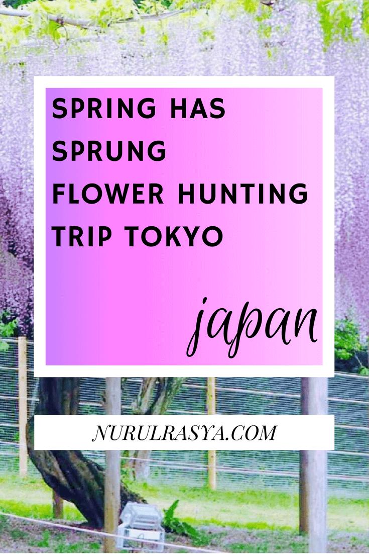 spring-flower-hunting-trip-tokyo-japan