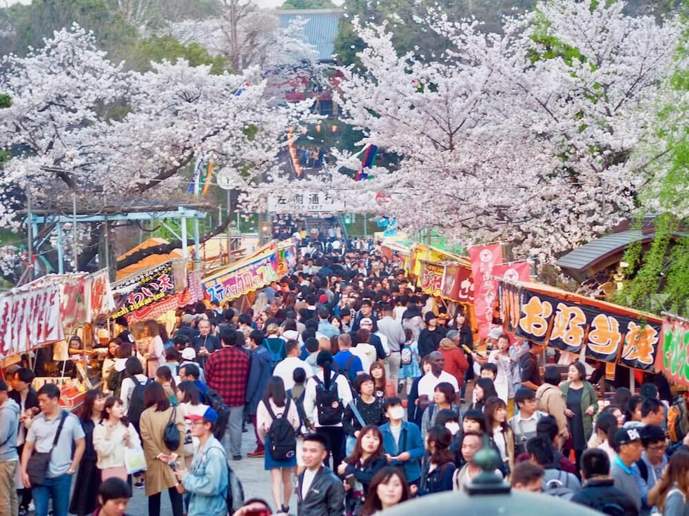 sakura matsuri festival