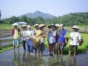 Para petani perempuan sedang bercengkrama di sawah/ Foto via pecidasase.blogspot.com