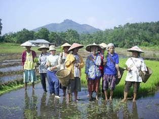 Para petani perempuan sedang bercengkrama di sawah/ Foto via pecidasase
