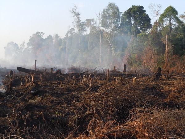 Lahan gambut terbakar/Ilustrasi/Foto via mongabay