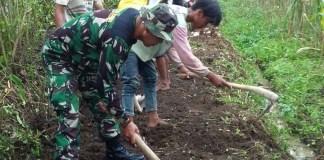 Babinsa Langkap bersama masyarakat Dusun Tegalan, Desa Langkap, Kecamatan Bangsalsari, Kabupaten Jember melakukan pelebaran jalan. Foto Sis/Nusantaranews