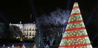 Pohon Natal/Foto Ilustrasi/IST