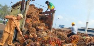 Ilustrasi Moratorium Ekspor Kelapa Mentah/Foto: Dok. Tribunnews