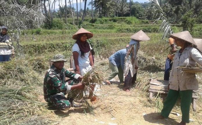 Babinsa Ramil 0824/06 Melakukan pendampingan kepada para petani. Foto sis/Nusantaranews