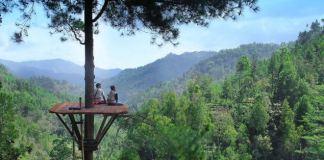 Pinus Kita Gemaharjo. Foto via pacitanku