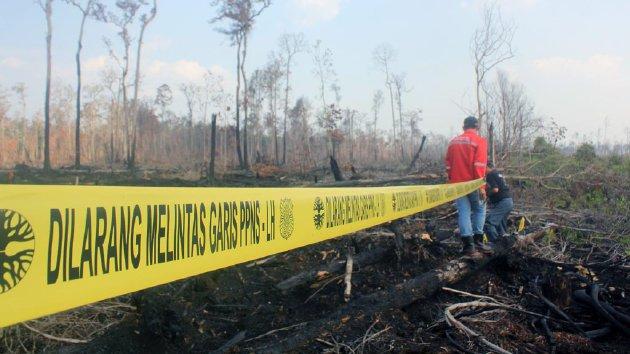areal konsesi lahan bekas kebakaran/Foto ilustrasi/kompas
