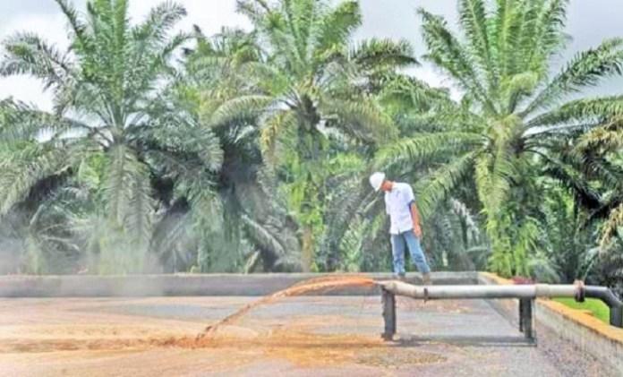 Limbah Sawit Bisa Jadi Sumber Energi Terbarukan. Foto Indah Sari Windu | ISW.co.id
