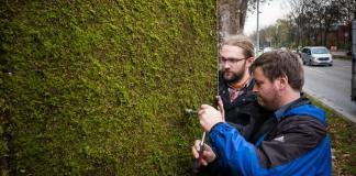 Dinding Lumut Untuk Membersihkan Udara Kotor/Foto via alliance/Nusantaranews