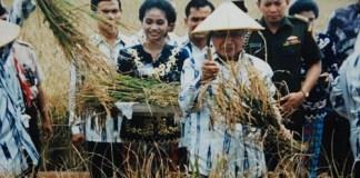 Pak Harto ketika sedang panen padi | soeharto.co