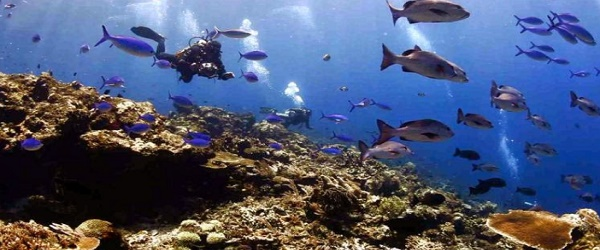 Ekosistem laut. (Foto: Saka Bahari)