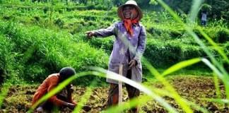 """""""Ini lahan kami. Kami negara agraris. Persetan dengan investor"""". Foto: Sugat Ibnu Ali"""