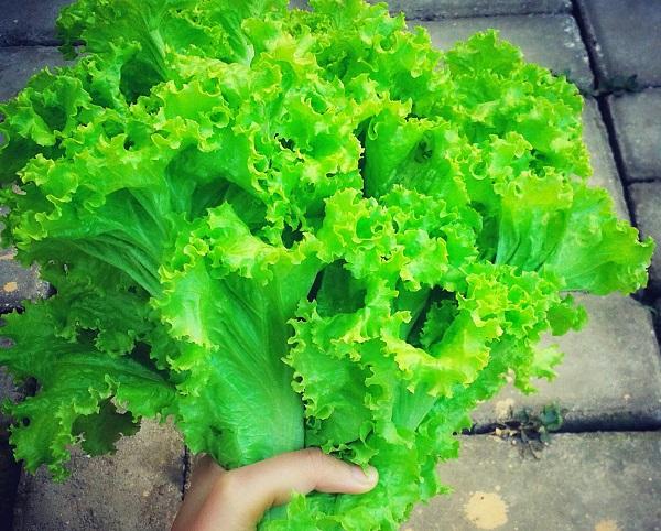 Sayuran Andewi/Foto via ambell/Nusantaranews