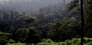 Kawasan Hutan Lindung Gunung Malabar, Bandung, Jawa Barat. Foto: Dok. PPID MenLHK)