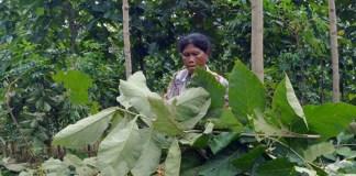 Petani Sambut Positif Rencana DPR Tinjau Lapangan Perhutanan Sosial. Foto: Dok. Media Indonesia