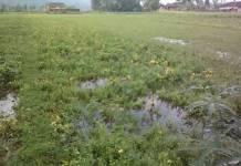 Ratusan lahan petani di Pacitan terendam banjir. (Foto: Dok. Kodim 0801/Pacitan)