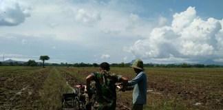 Aksi Babinsa 0807/10 Mendukung Swasembada Pangan Nasional. Foto: Md 0807/ NusantaraNews