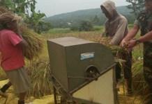 Panen Padi Seluar 40 Hektar di Wilayah Ponorogo (Foto Nurcholis/Nusantaranews)