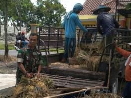 Kelompok Tani (Poktan) Lumintu Desa Sukorame, Lamongan, Jawa Timur mengakui berkat program TNI hasil panen padi meningkat. (Foto: Istimewa/NusantaraNews)