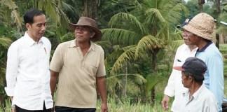 Presiden saat meninjau pelaksanaan padat karya tunai irigasi kecil dan jalan produksi di Desa Kukuh, Kecamatan Marga, Kabupaten Tabanan, Provinsi Bali, Jumat (23/2). (Foto: BPMI)