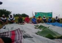 Kegiatan panen raya padi Kelompok tani (Poktan) Ngudi Jaya Kecamatan Badas, Kabupaten Kediri, Jawa Timur. (Foto: Istimewa)