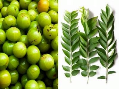 बालों को काला करने वाला तेल बनाइये आमला और कढ़ी पत्ते से , Baalon ko kala karne wala tel banaiye amla aur curry patte se