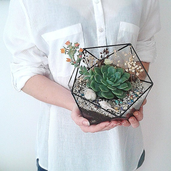Terrariums are on the top 10 list of Christmas gifts for gardeners on Nutmeg Disrupted