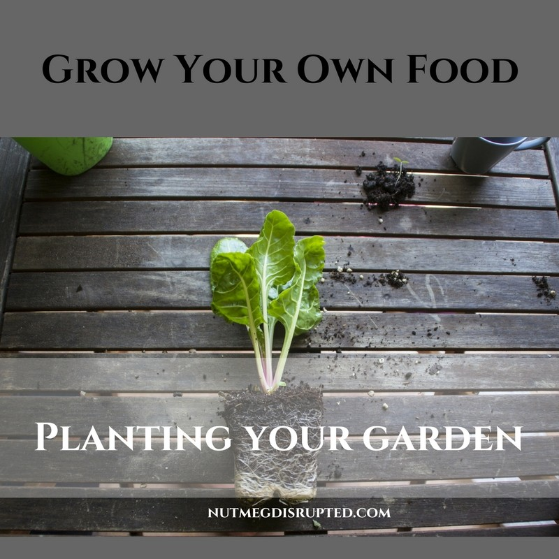 Grow Your Own Food Planting Your Garden on Nutmeg Disrupted