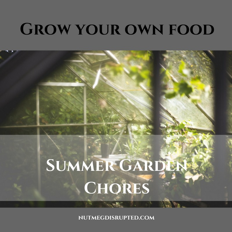 Grow Your Own Food Summer Garden Chores on Nutmeg Disrupted