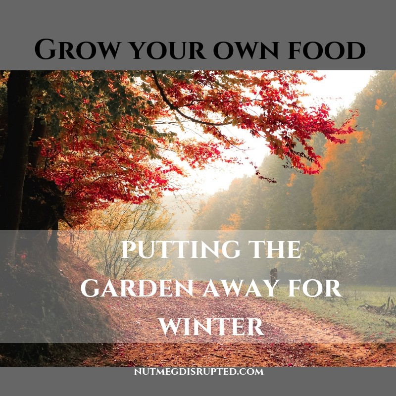 Grow Your Own Food - Putting The Garden Away for Winter on Nutmeg Disrupted