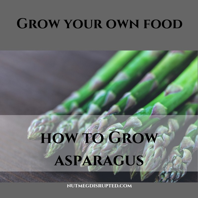 Grow Your Own Food - Growing Asparagus with Nutmeg Disrupted