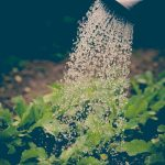 Grow Your Own Food A Guide to Irrigation