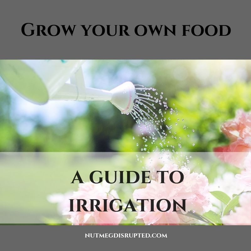 Grow Your Own Good A Guide to Garden Irrigation on Nutmeg DIsrupted