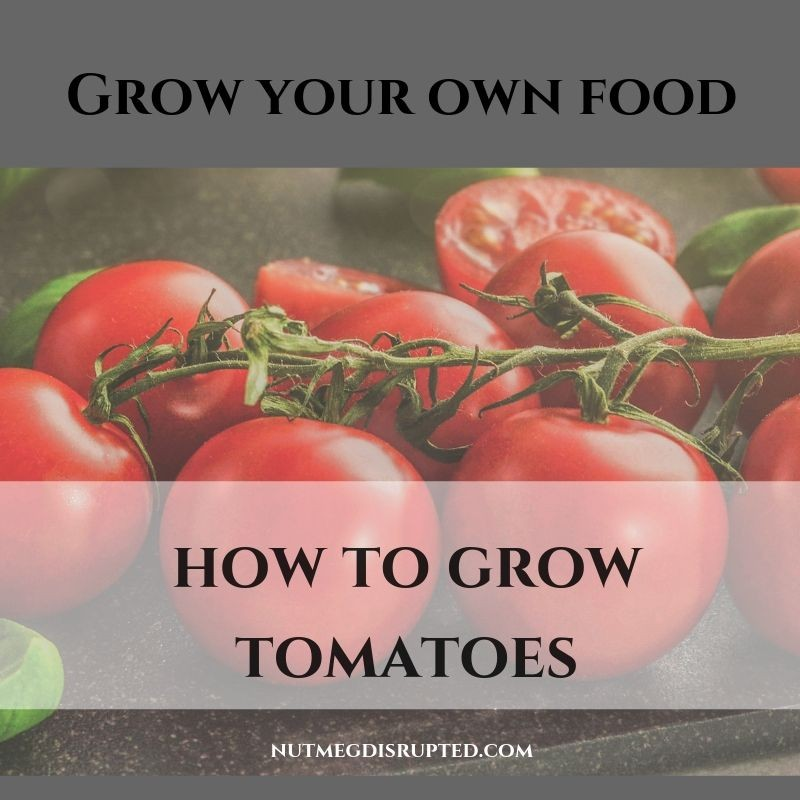 Grow Your Own Food HOw to Grow Tomatoes with Nutmeg Disrupted