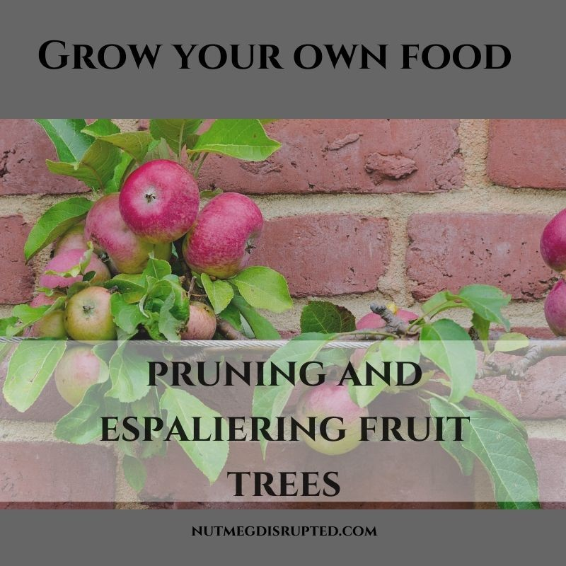 Grow Your Own Food Pruning and Espaliering Fruit Trees on Nutmeg Disrupted