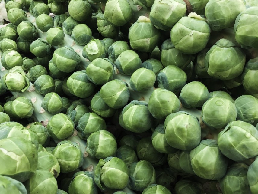 Harvested Brussels Sprouts stems on Nutmeg Disrupted