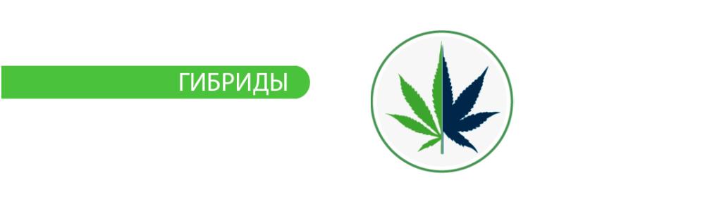 Купить Семена Конопли Nutra-Seeds.com