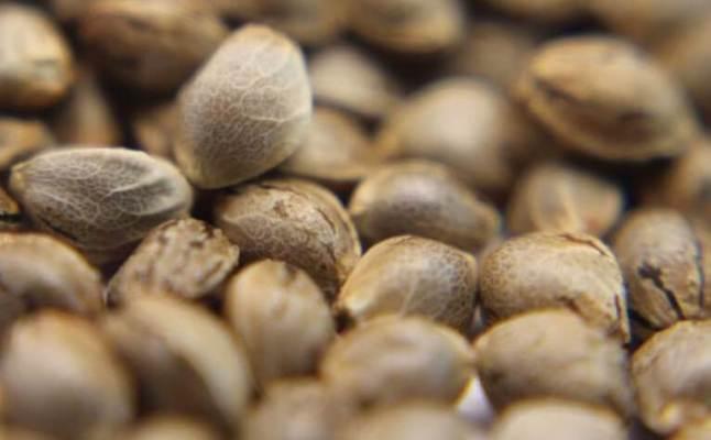 Каталог Семян Конопли Nutras Seeds