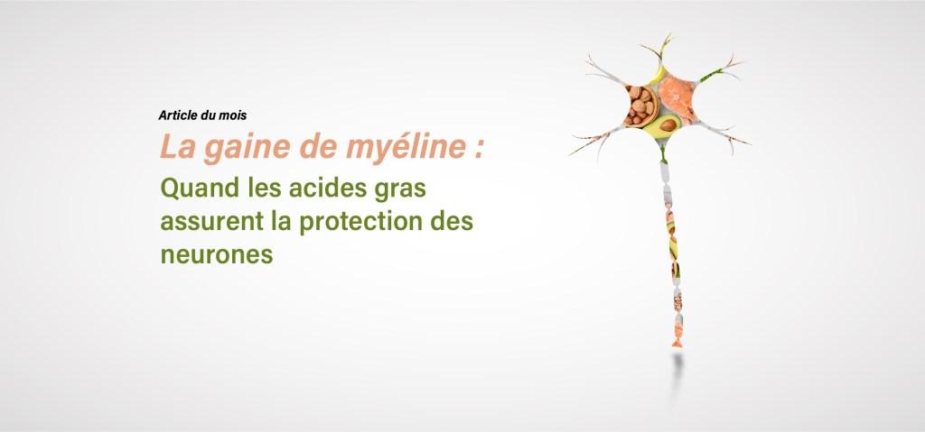 La gaine de myéline : quand les acides gras assurent la protection des neurones