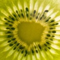 1116810_textured_kiwi_fruit_slice