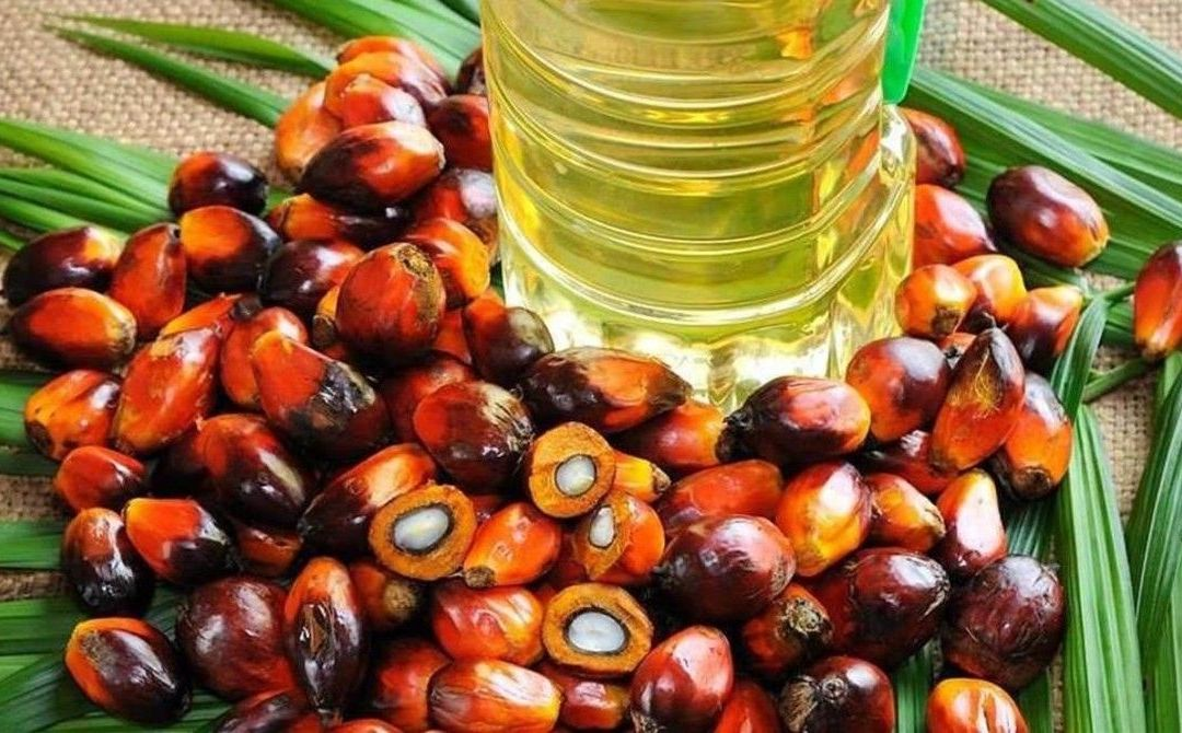 ¿Qué es el aceite de palma?