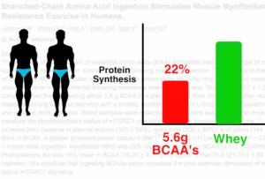 suero proteína whey vs bcaa