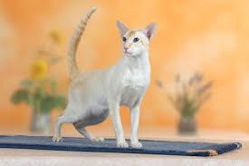 Как правильно делать массаж задних лап коту или кошке