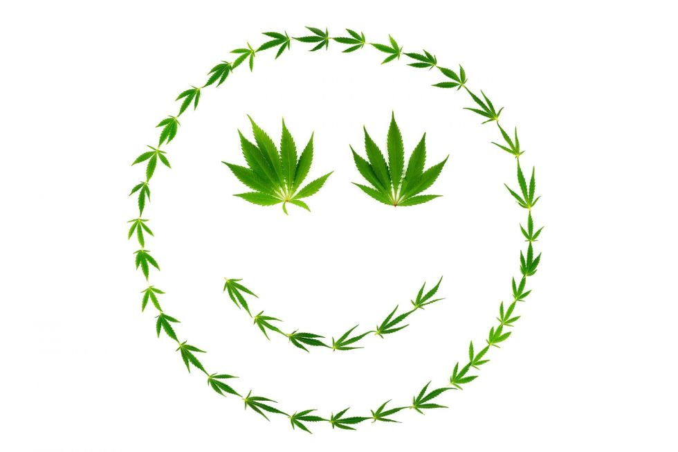 Smiling face made of cannabis leaves isolated on white background